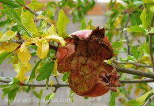 Árbol sin protección red anti-pájaros