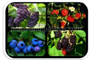 malla anti pajaros en cultivos de berries