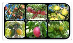 malla anti pajaros en cultivos