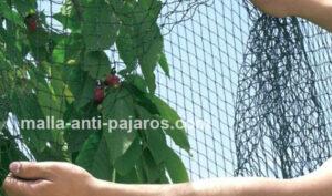 thumbnail_solucion-pajaros-frutales2
