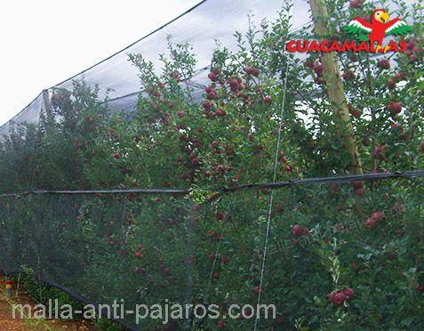 Malla anti-pájaros GUACAMALLAS.